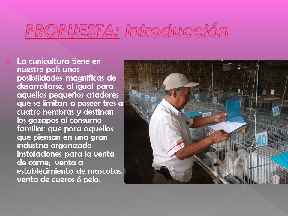 PROPUESTA: Introducción