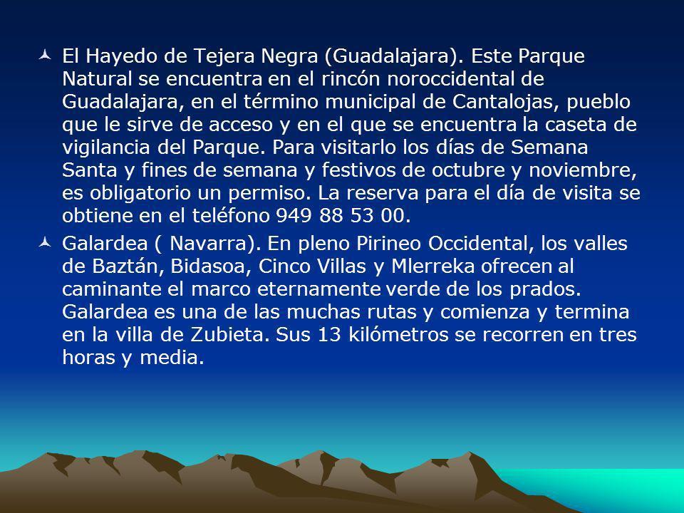 El Hayedo de Tejera Negra (Guadalajara)