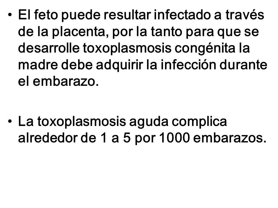 El feto puede resultar infectado a través de la placenta, por la tanto para que se desarrolle toxoplasmosis congénita la madre debe adquirir la infección durante el embarazo.