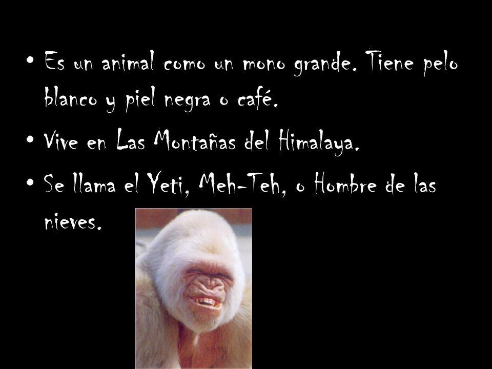 Es un animal como un mono grande. Tiene pelo blanco y piel negra o café.
