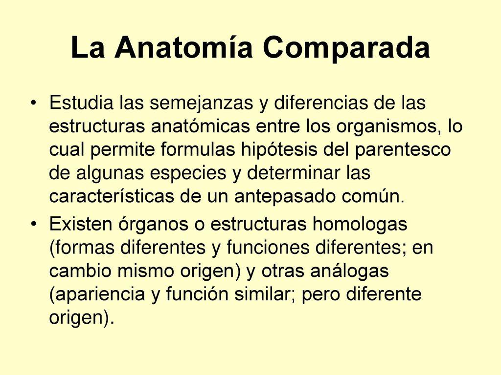 Moderno Definir El Origen En La Anatomía Inspiración - Anatomía de ...