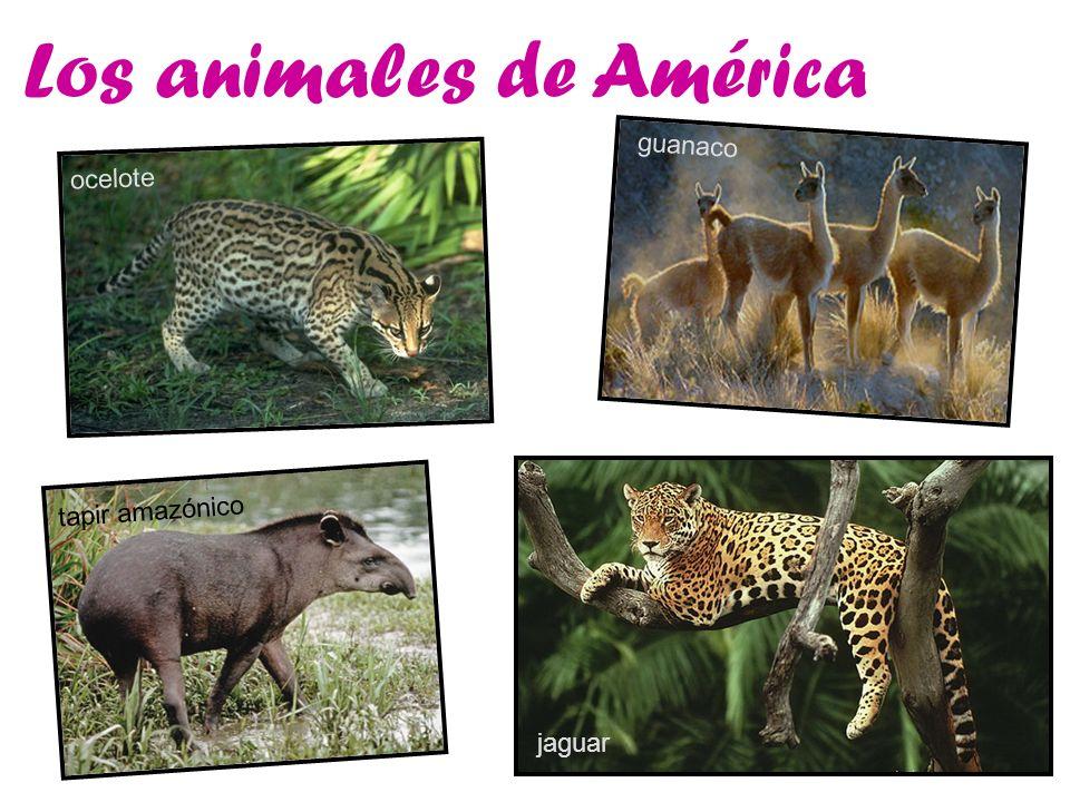 Los animales de América