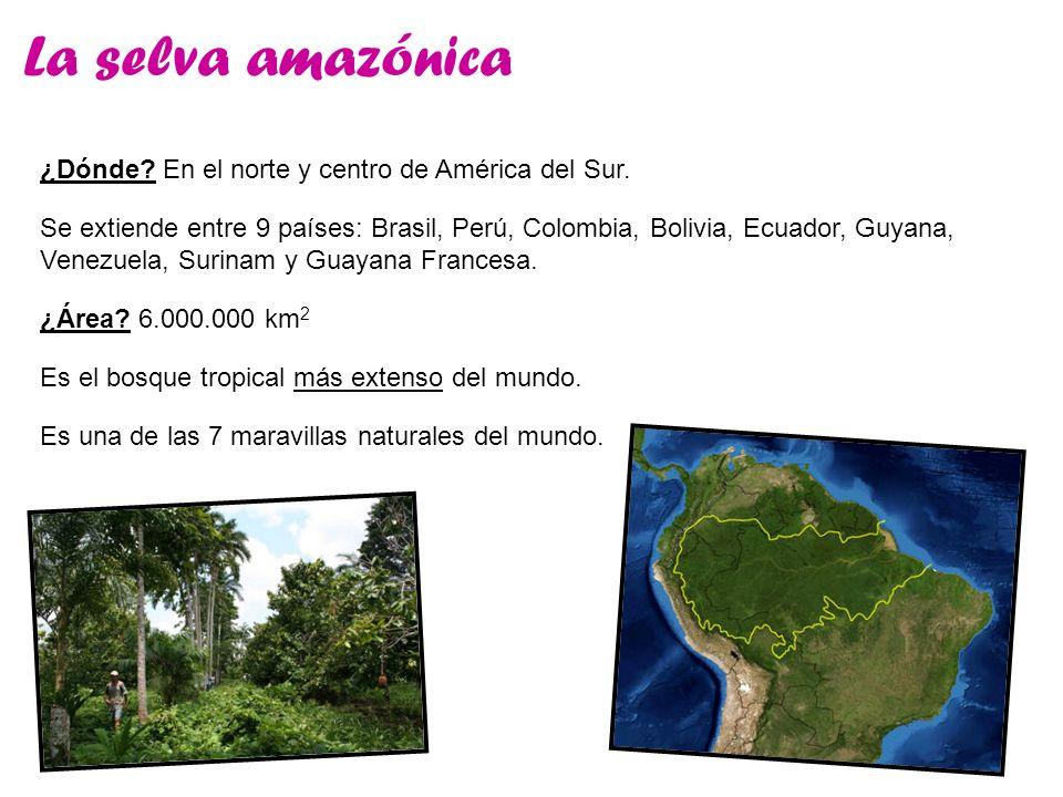 La selva amazónica ¿Dónde En el norte y centro de América del Sur.
