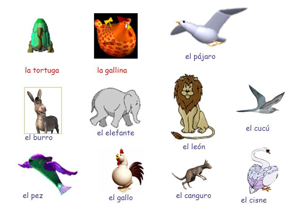 el pájaro la tortuga. la gallina. el cucú. el elefante. el burro. el león. el pez. el canguro.