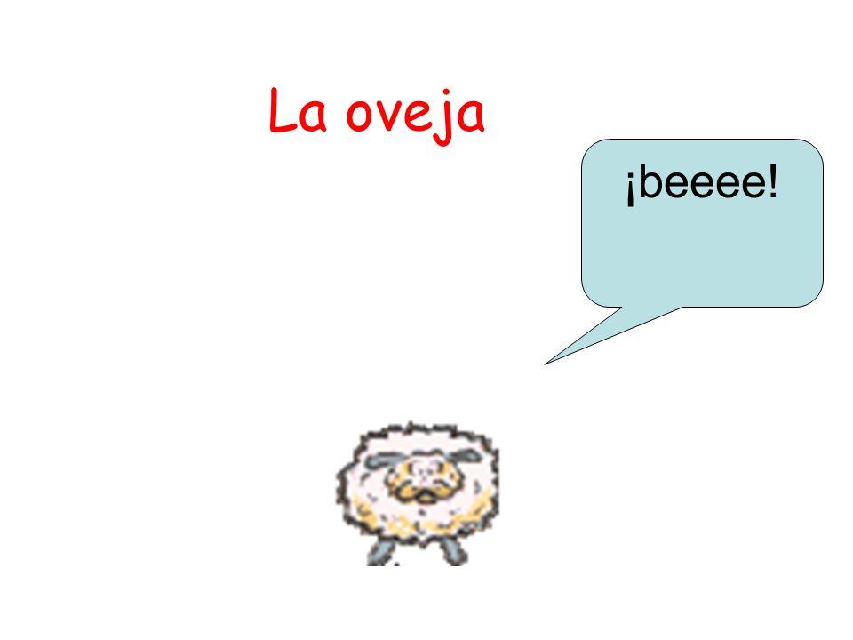 La oveja ¡beeee!