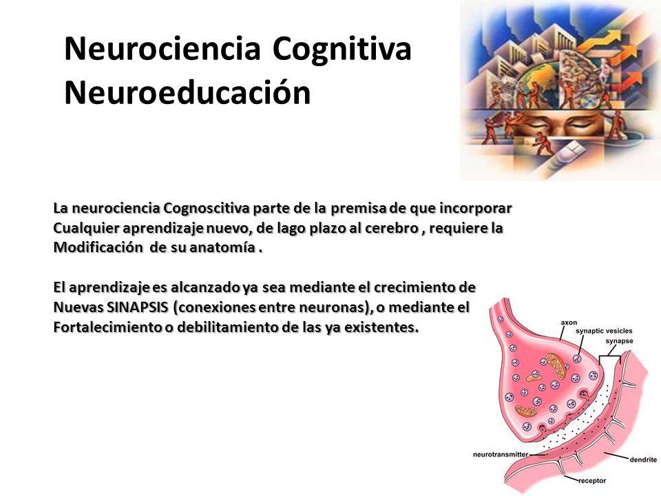 Neurociencia Cognitiva Neuroeducación