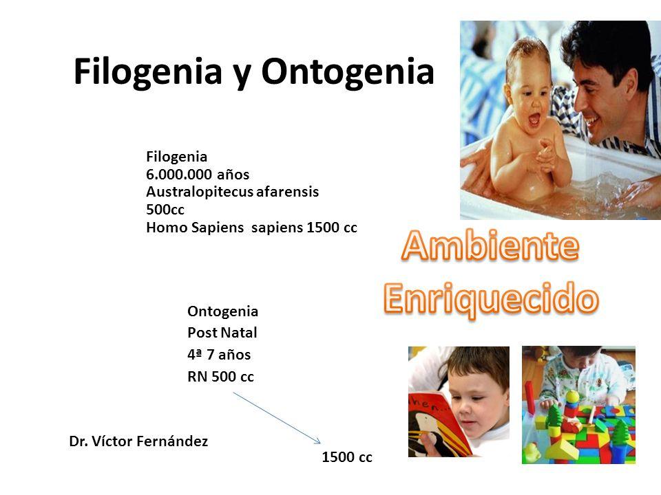 Ambiente Enriquecido Filogenia y Ontogenia Filogenia 6.000.000 años