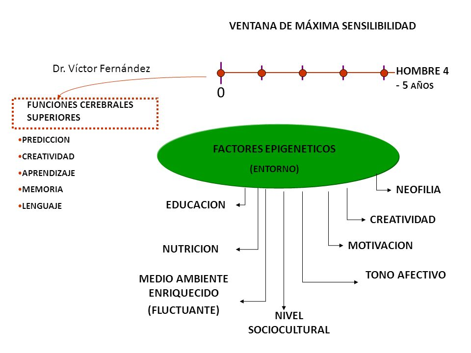 VENTANA DE MÁXIMA SENSILIBILIDAD