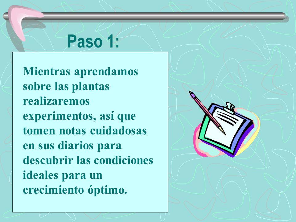 Paso 1: