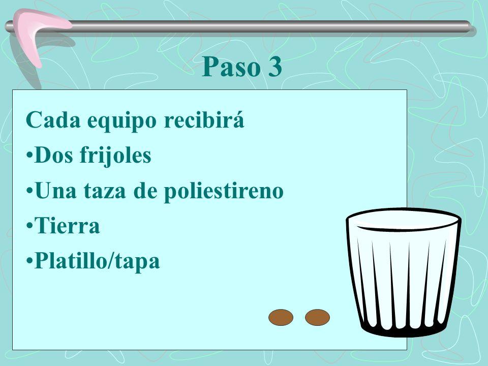 Paso 3 Cada equipo recibirá Dos frijoles Una taza de poliestireno