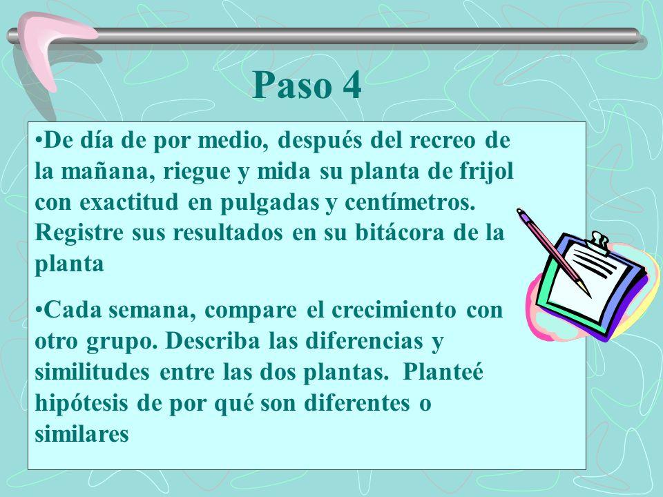 Paso 4