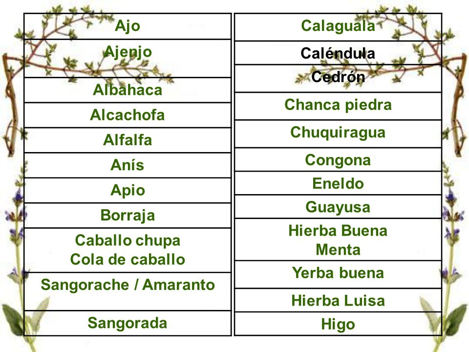 AjoAjenjo. Albahaca. Alcachofa. Alfalfa. Anís. Apio. Borraja. Caballo chupa. Cola de caballo. Sangorache / Amaranto.