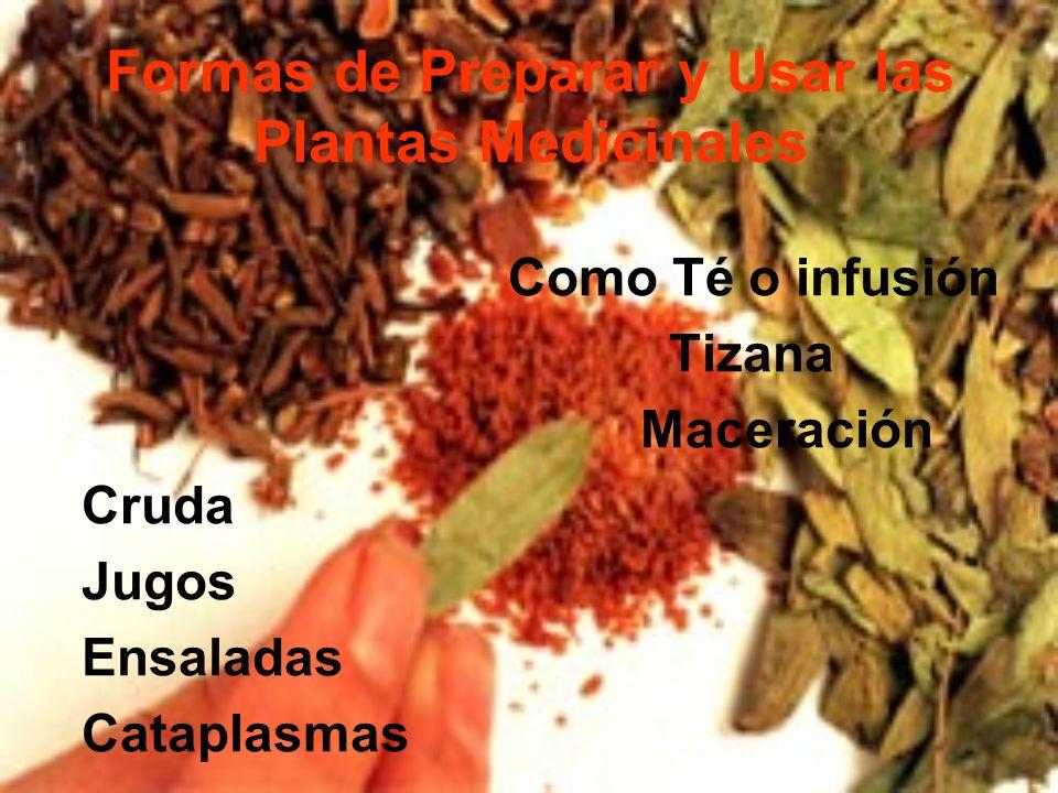 Formas de Preparar y Usar las Plantas Medicinales