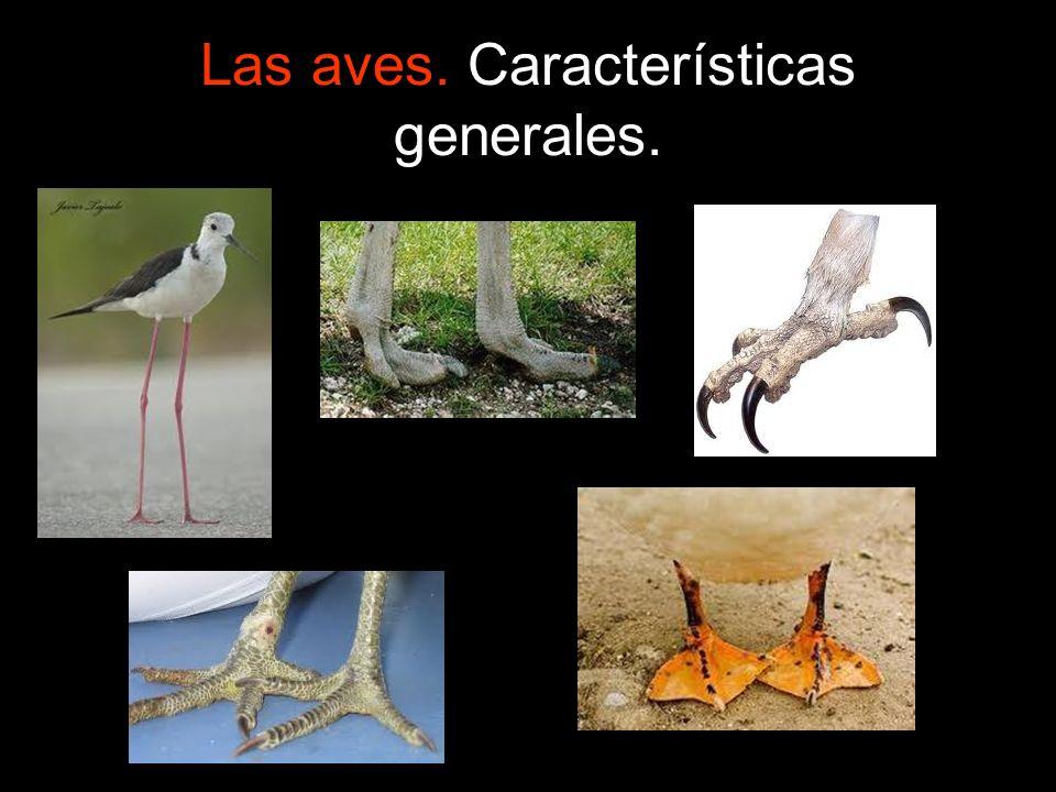 Las aves. Características generales.