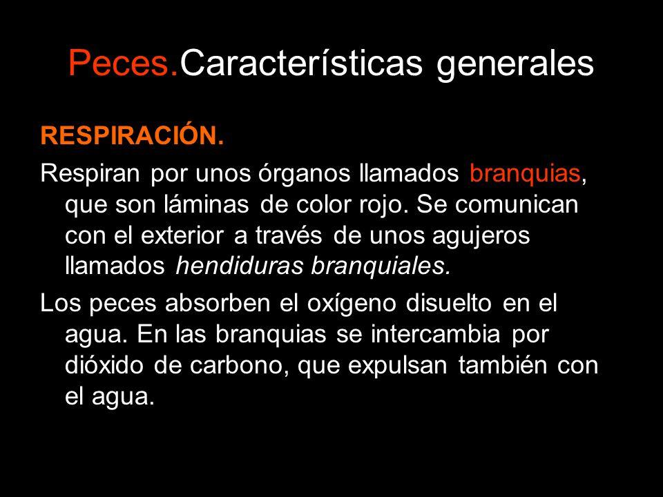 Peces.Características generales