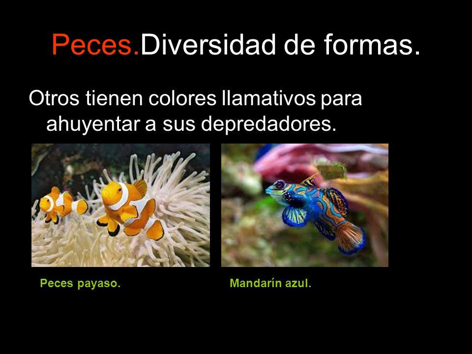 Peces.Diversidad de formas.