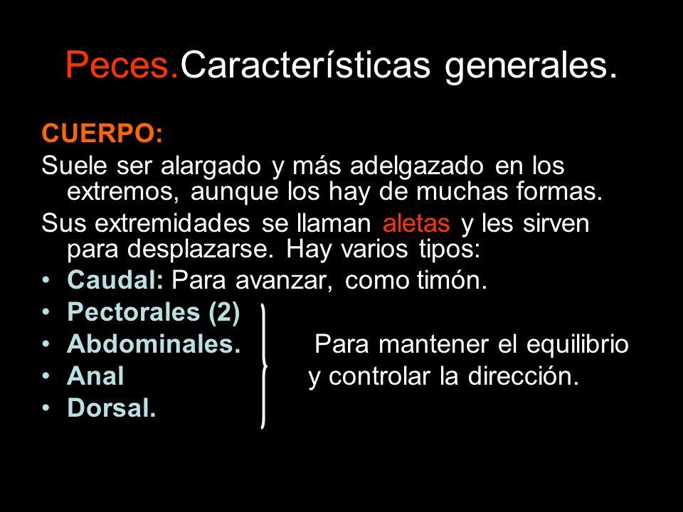 Peces.Características generales.