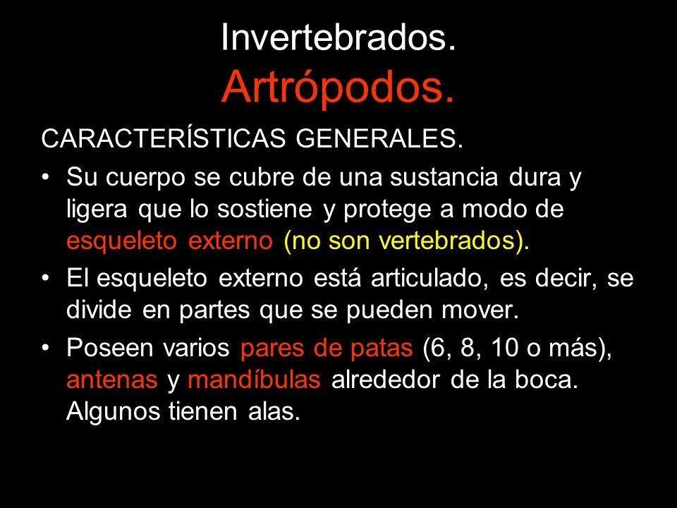 Invertebrados. Artrópodos.