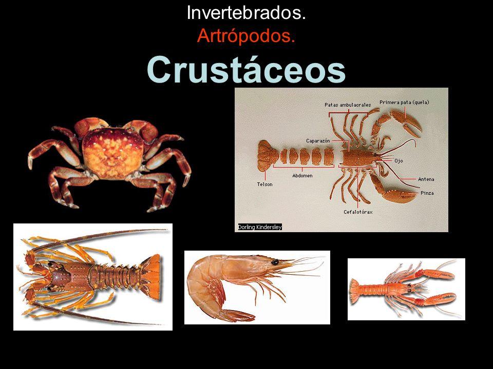 Invertebrados. Artrópodos. Crustáceos