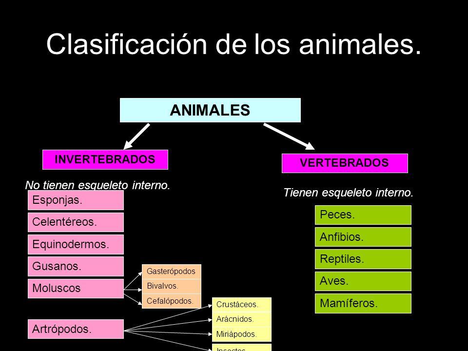 Clasificación de los animales.