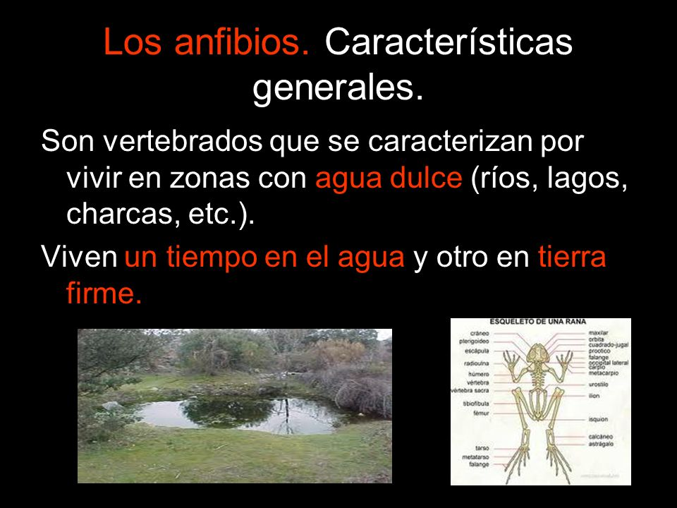 Los anfibios. Características generales.