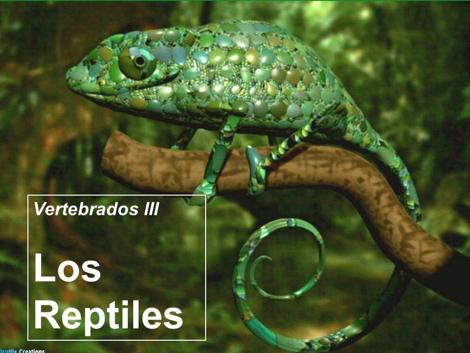 Vertebrados III Los Reptiles