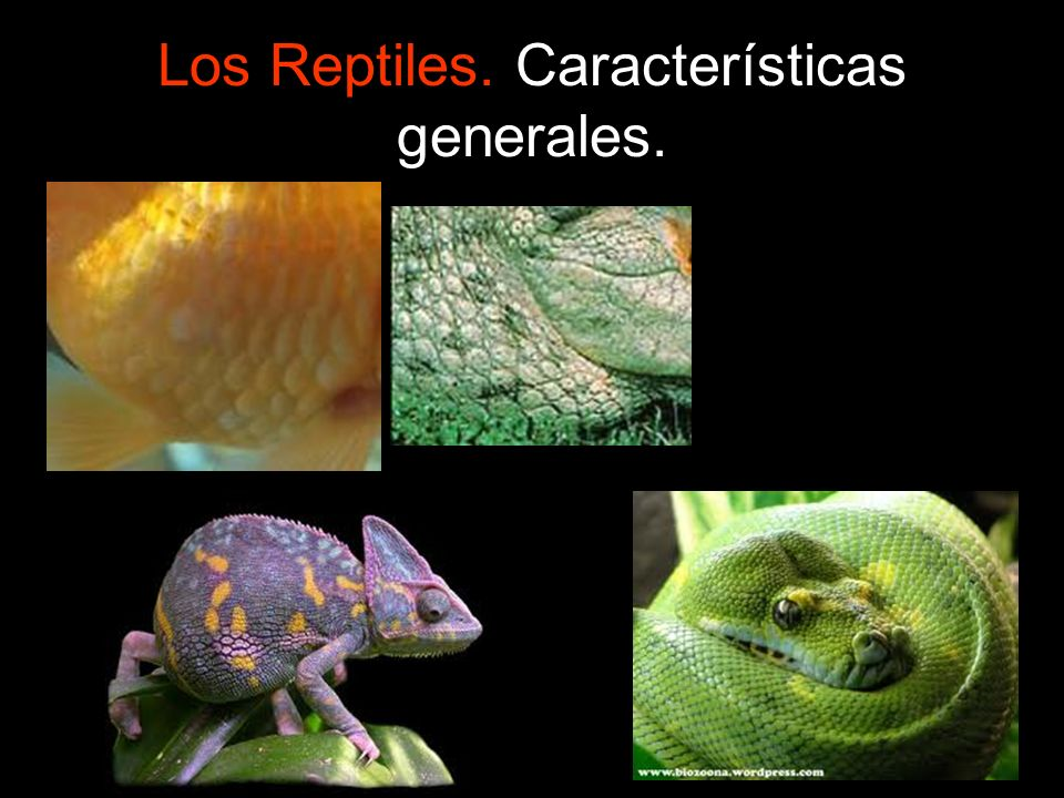 Los Reptiles. Características generales.