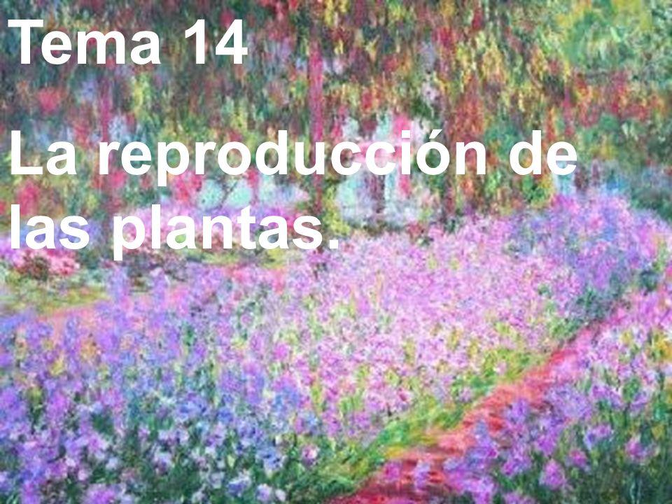 Tema 14 La reproducción de las plantas.