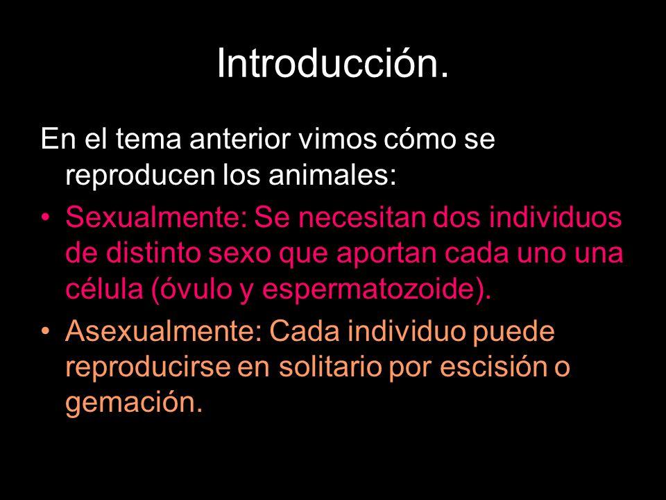 Introducción.En el tema anterior vimos cómo se reproducen los animales: