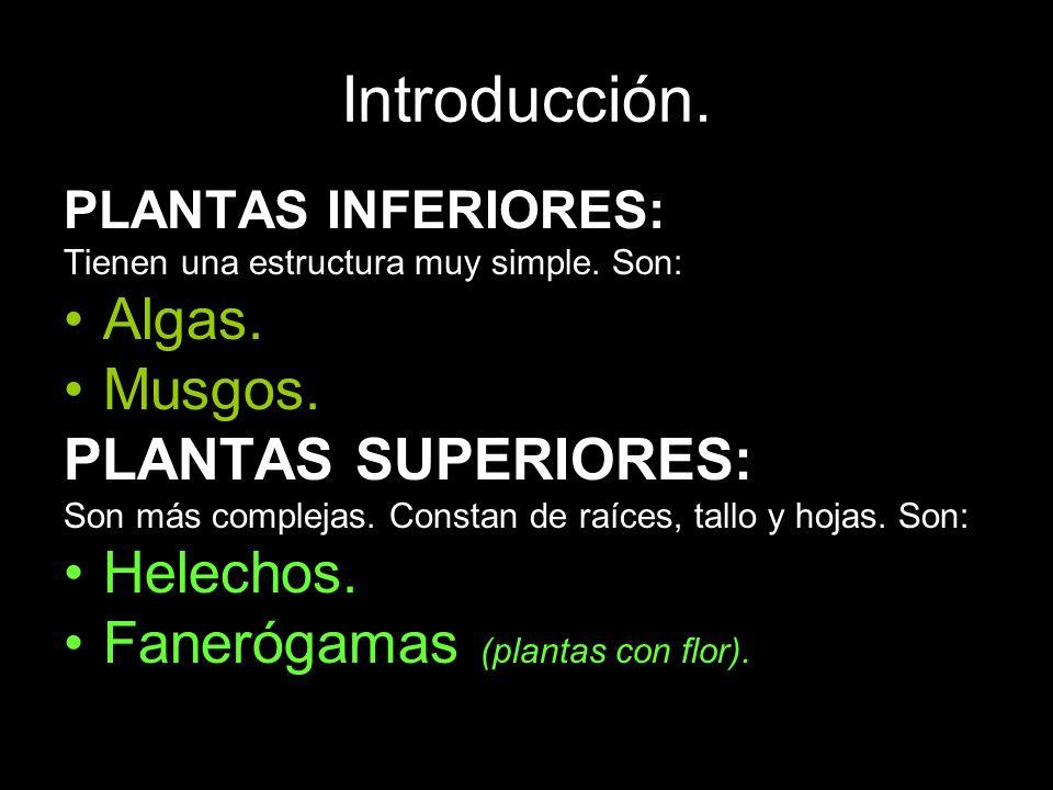 Introducción. Algas. Musgos. PLANTAS SUPERIORES: Helechos.