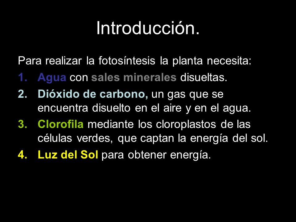 Introducción. Para realizar la fotosíntesis la planta necesita: