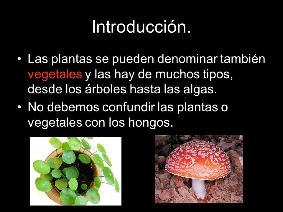 Introducción. Las plantas se pueden denominar también vegetales y las hay de muchos tipos, desde los árboles hasta las algas.