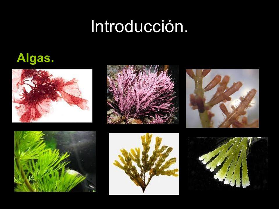 Introducción. Algas.