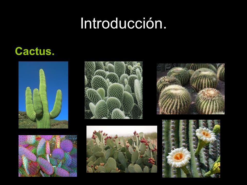 Introducción. Cactus.