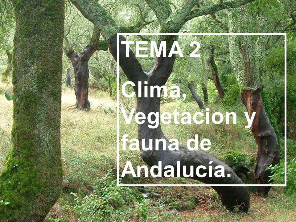 TEMA 2 Clima, Vegetacion y fauna de Andalucía.