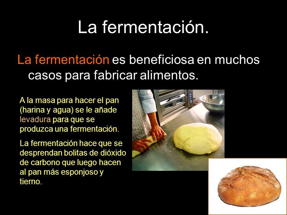 La fermentación.La fermentación es beneficiosa en muchos casos para fabricar alimentos.