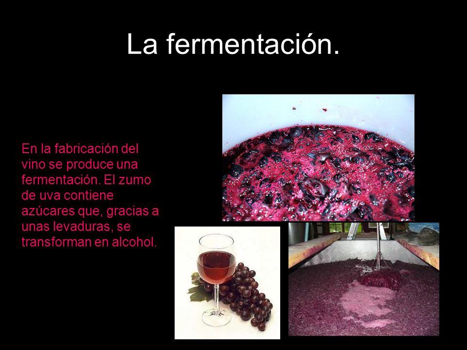 La fermentación.