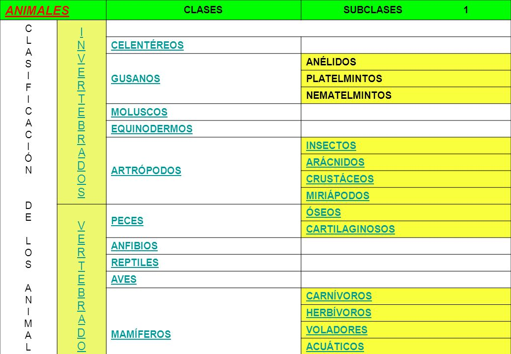ANIMALES I N V E R T E B R A D O S V E R T E B R A D O S CLASES