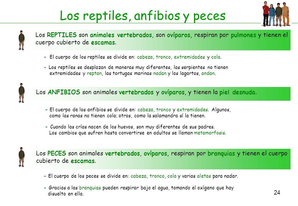 Los reptiles, anfibios y peces