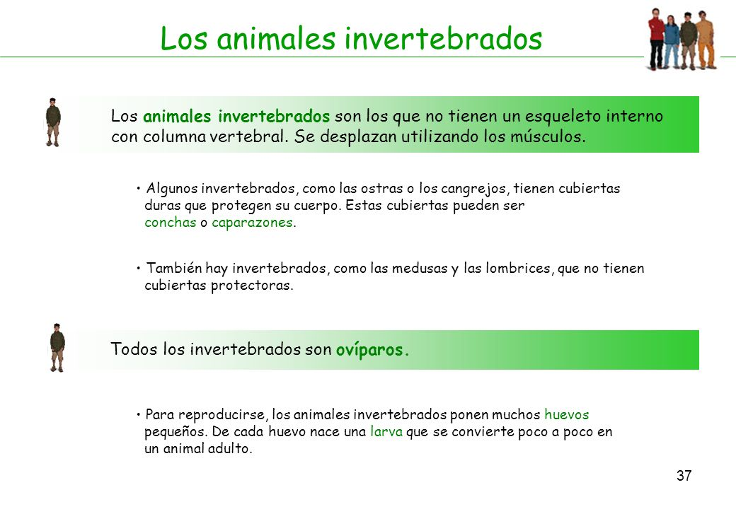 Los animales invertebrados