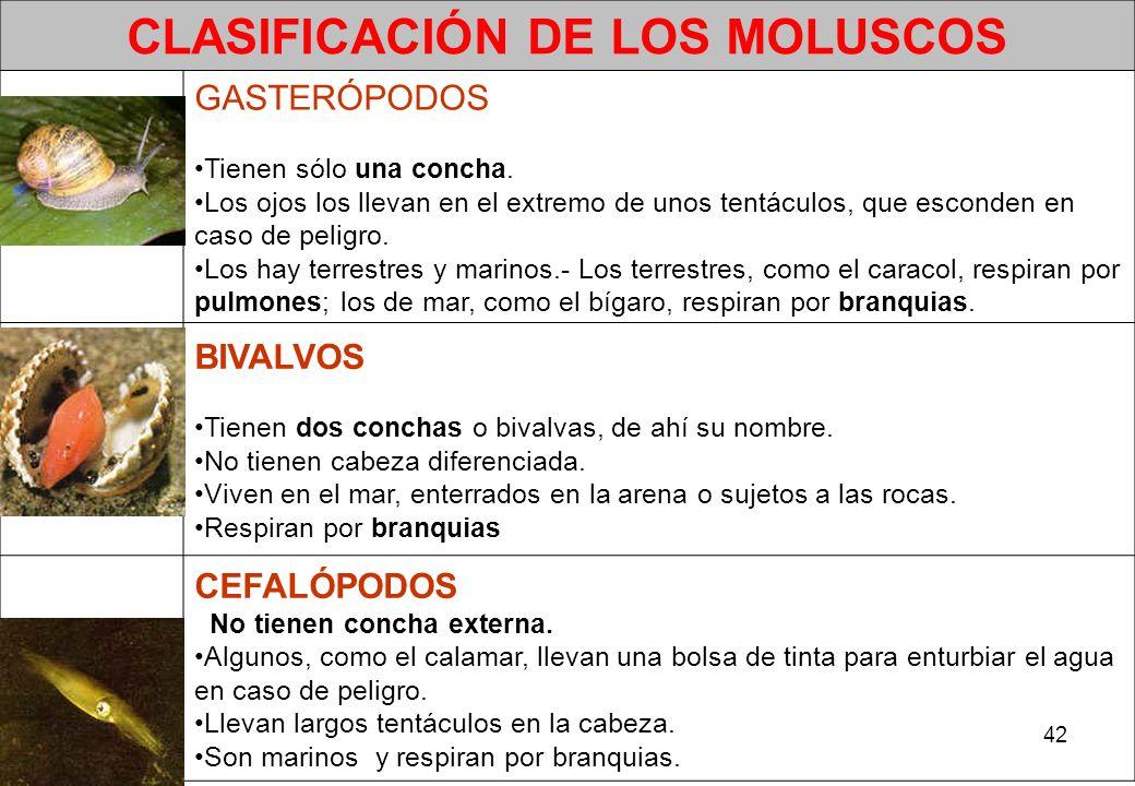 CLASIFICACIÓN DE LOS MOLUSCOS