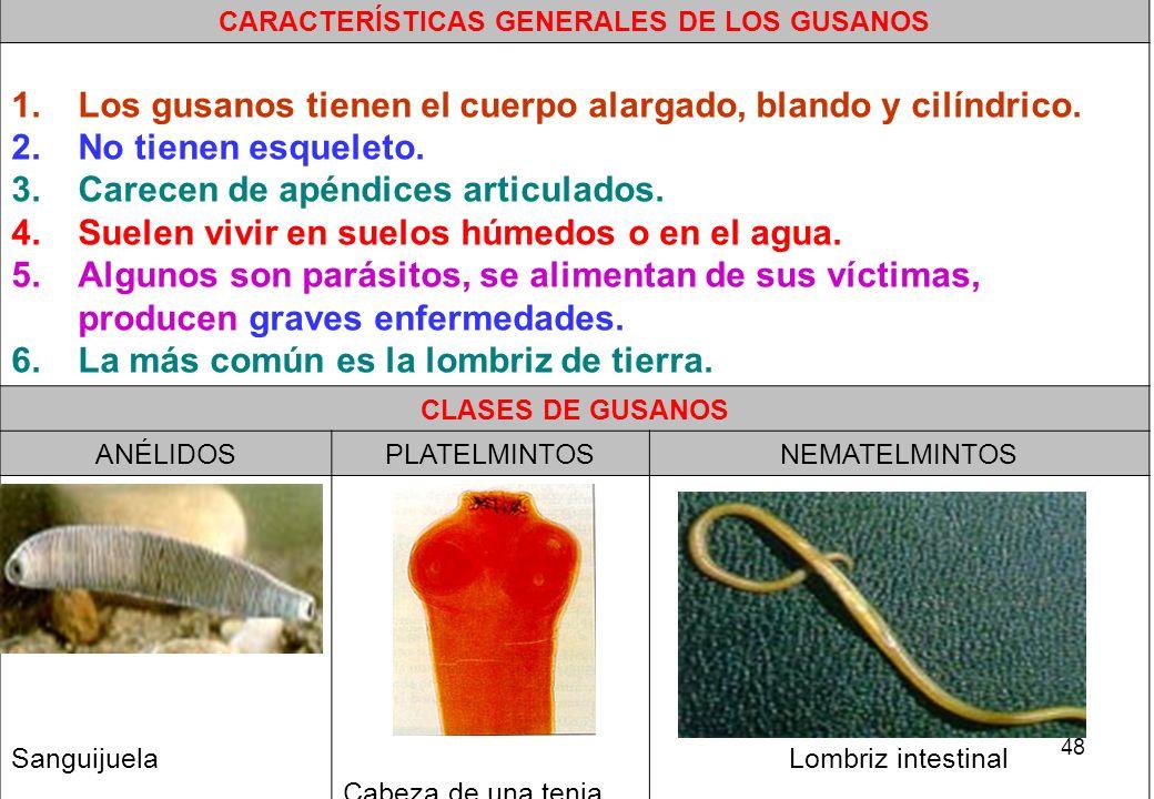 CARACTERÍSTICAS GENERALES DE LOS GUSANOS