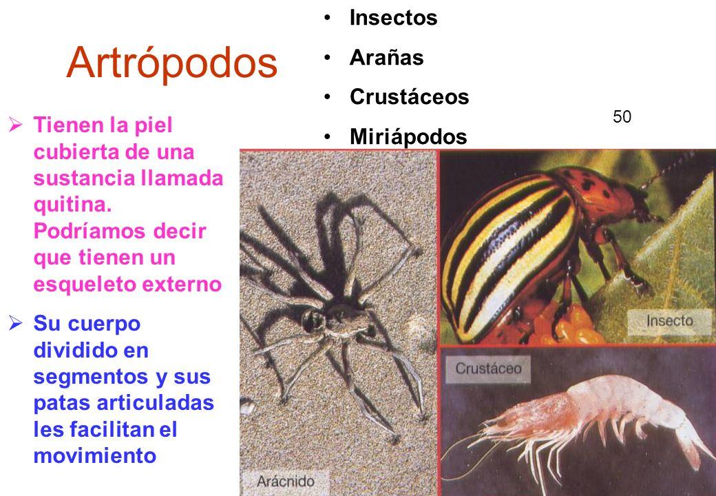 Artrópodos Insectos Arañas Crustáceos Miriápodos