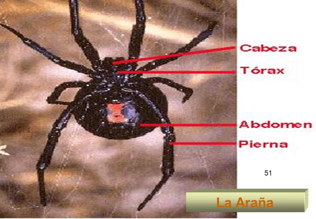 51 La Araña