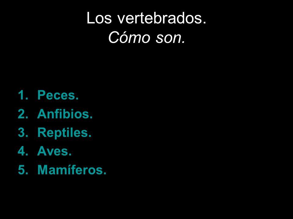 Los vertebrados. Cómo son.