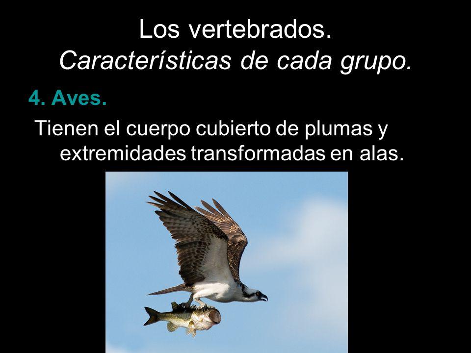 Los vertebrados. Características de cada grupo.