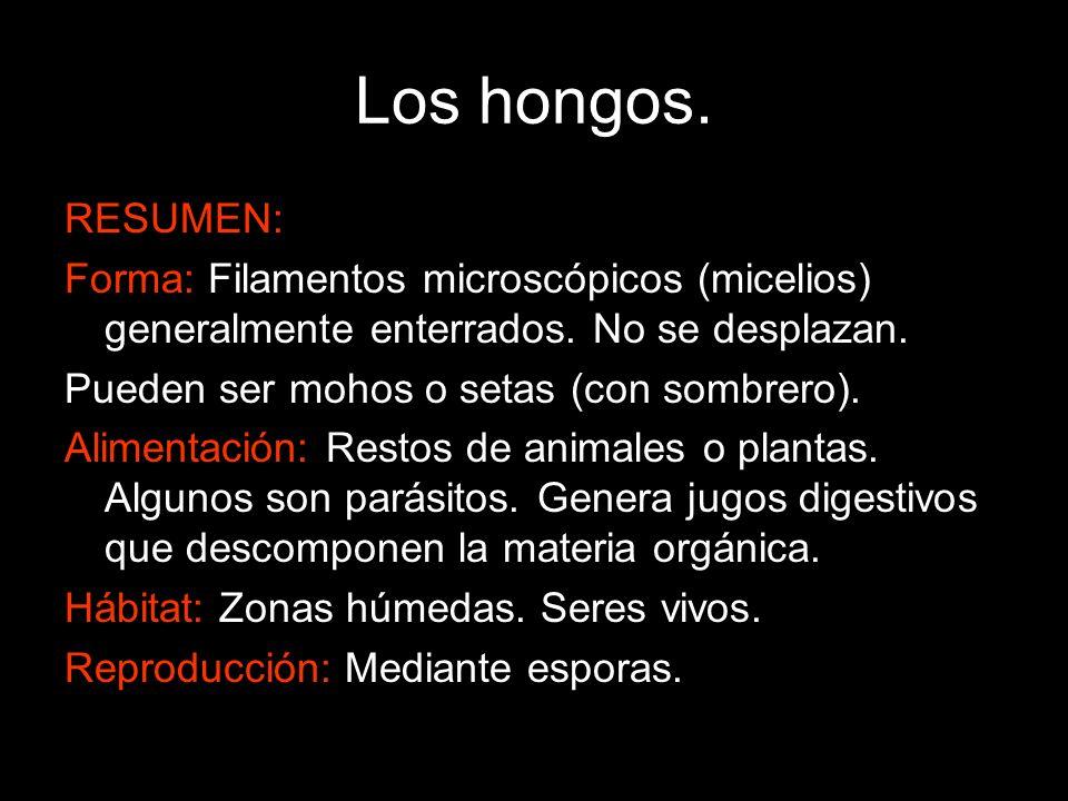 Los hongos. RESUMEN: Forma: Filamentos microscópicos (micelios) generalmente enterrados. No se desplazan.