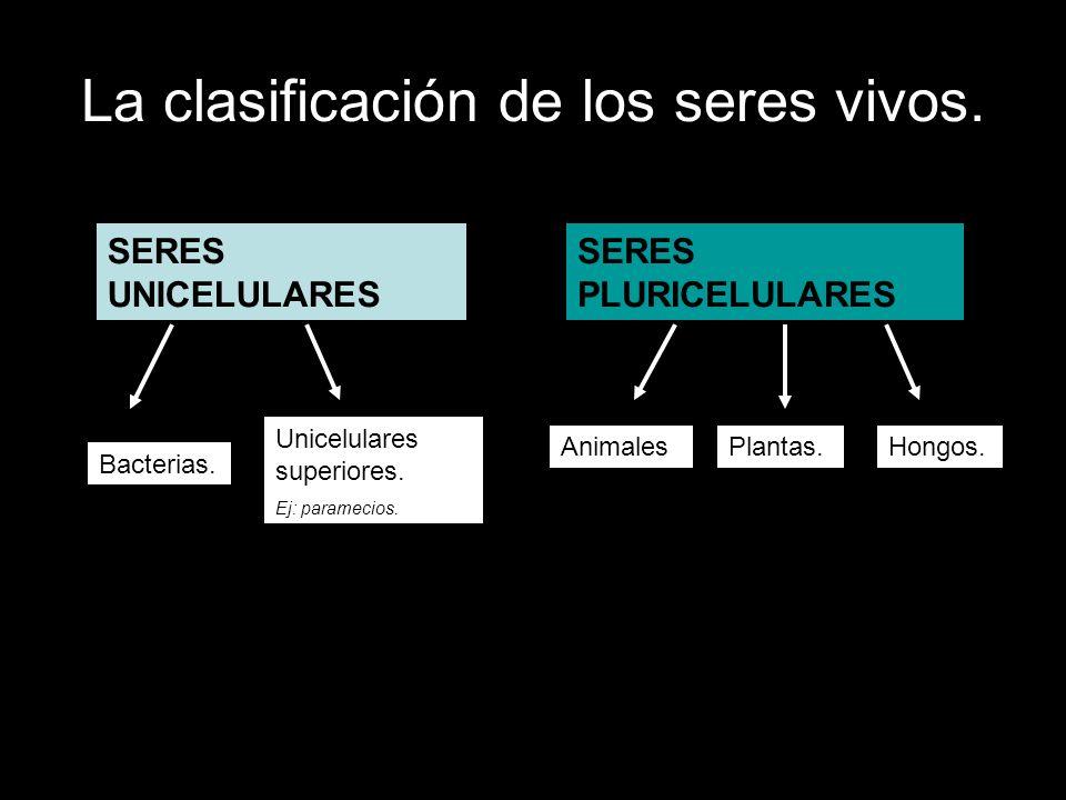 La clasificación de los seres vivos.
