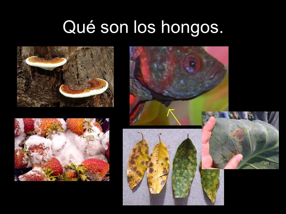 Qué son los hongos.
