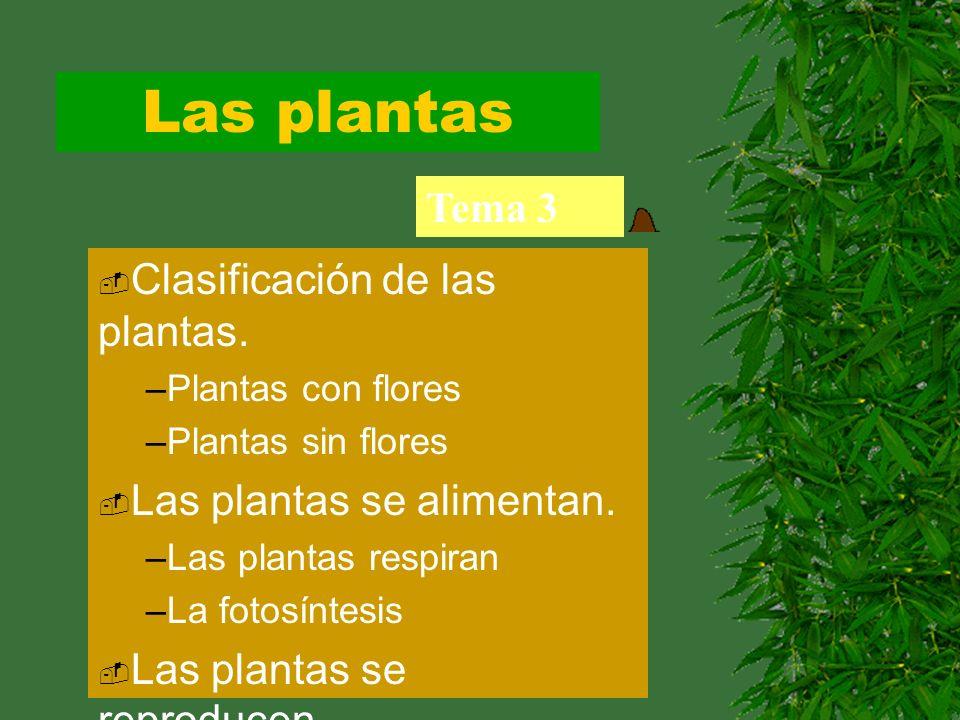 Las plantas Tema 3 Clasificación de las plantas.